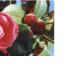 fiori-foto